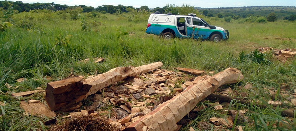 Polícia Militar Ambiental de Cassilândia autua empreiteiro em R$ 18,5 mil por ter sido contratado para retirar madeira seca e derrubava árvores em fazenda