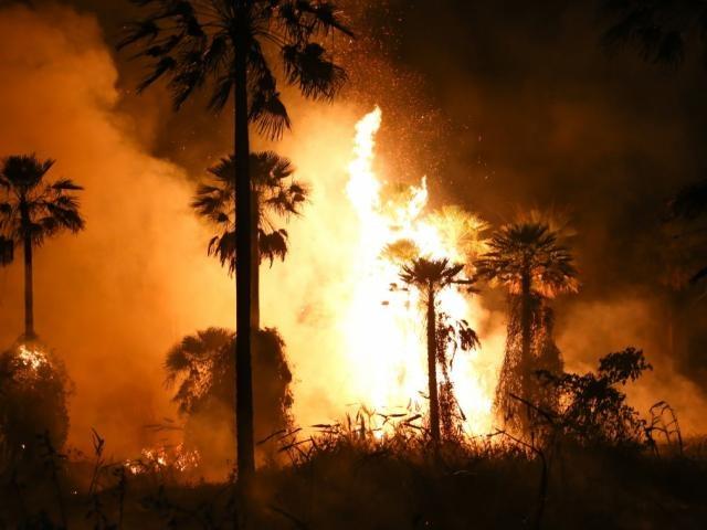 Buritis sendo consumido pelo fogo na região pantaneira. (Foto: Paulo Francis)