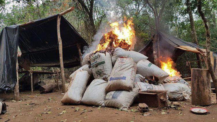 PF destrói 3 mil toneladas de maconha de plantações no Paraguai